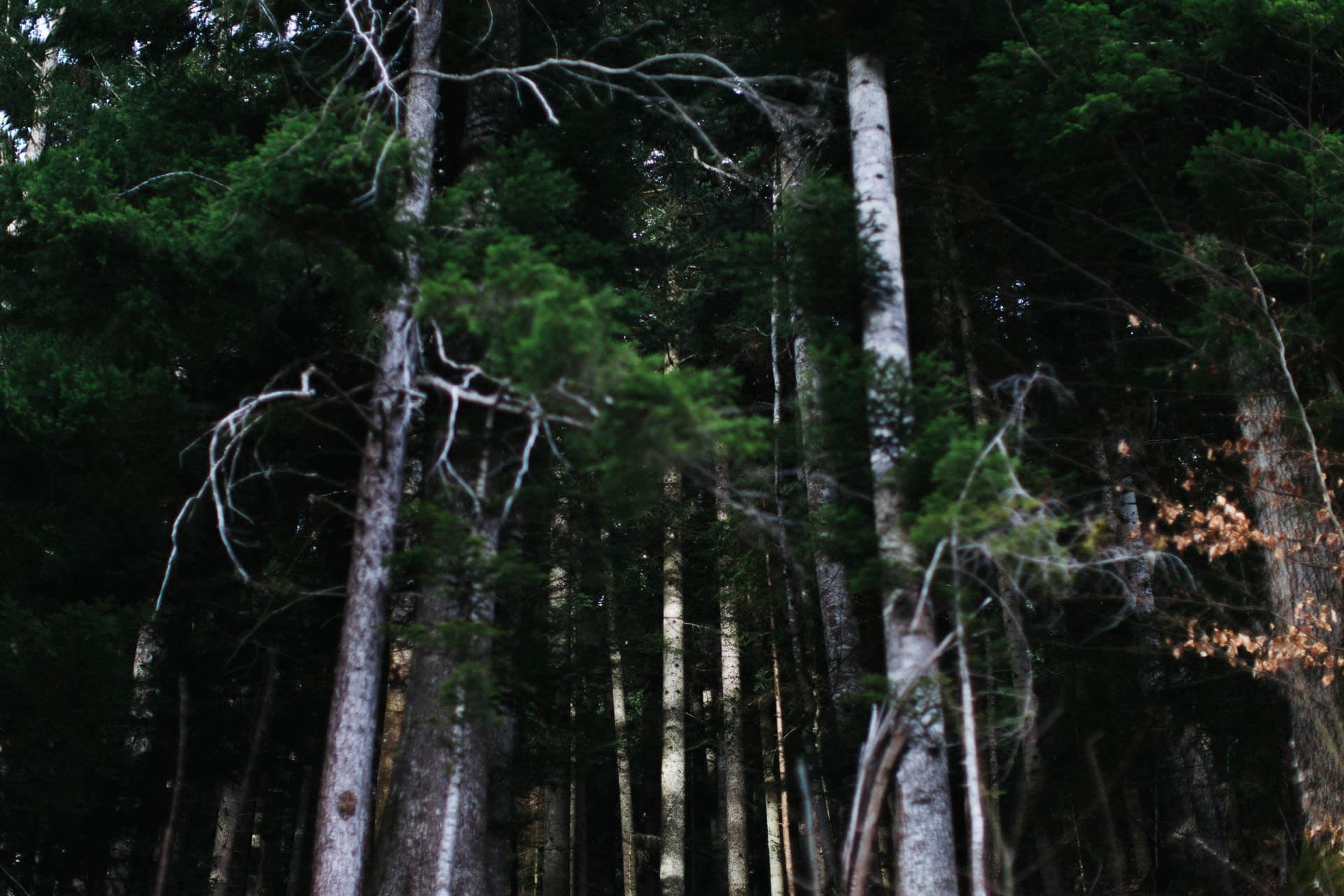 02 - Workshop nature et montagne