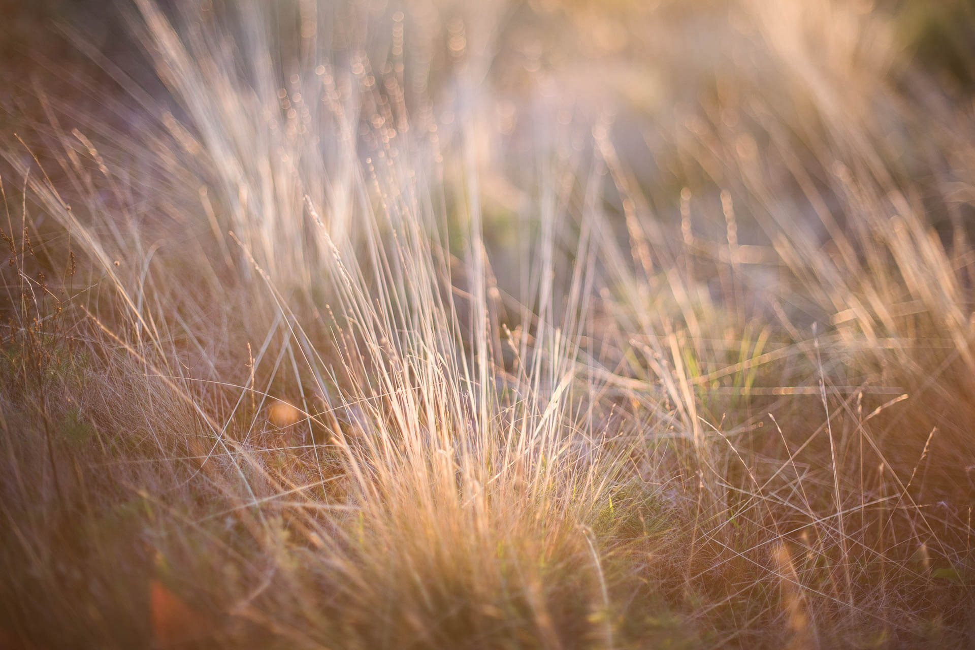 Photographe nature-40