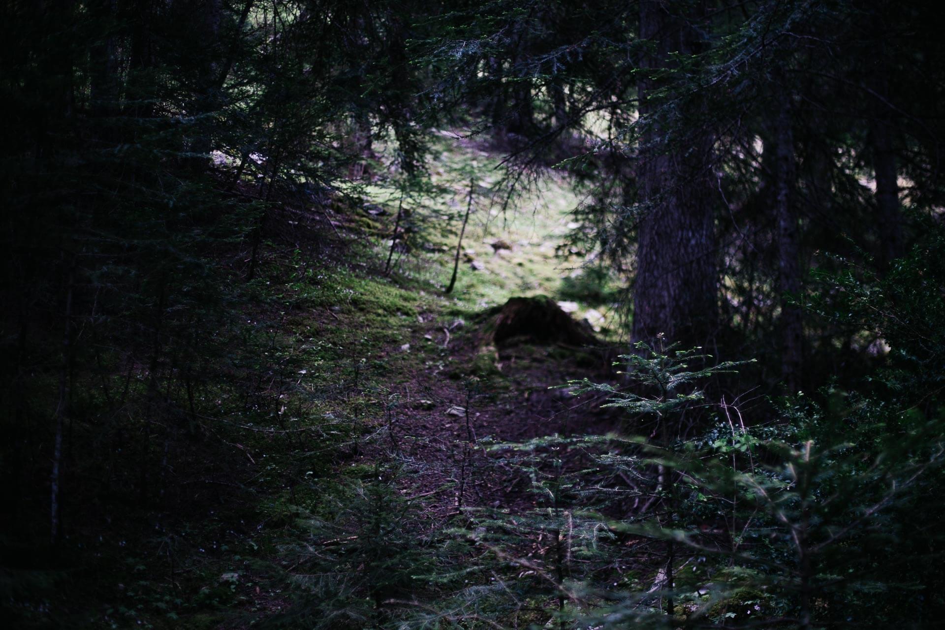 Photographe nature-5